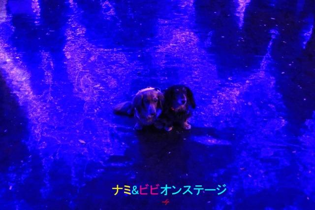 ナミ&ビビオン・ステージ.jpg