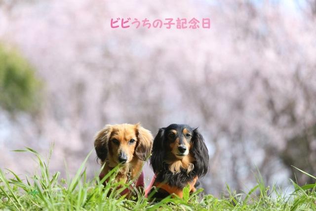ビビうちの子記念日.jpg