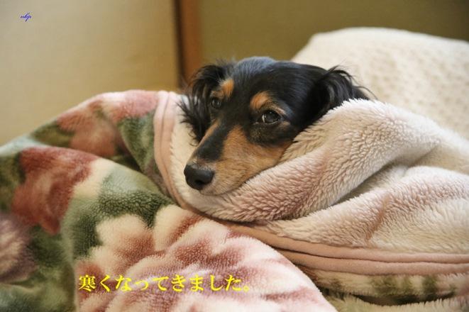寒くなってきました。ナミ.jpg