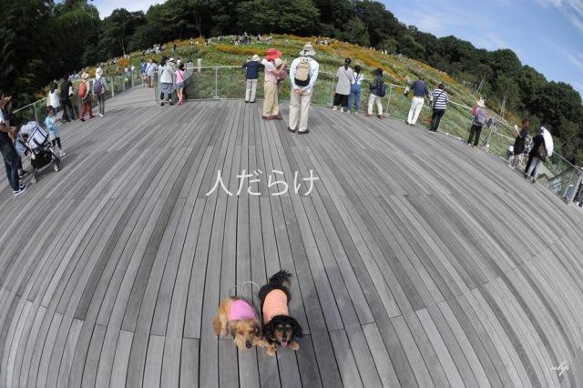 里山ガーデン.jpg