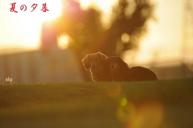 夏の夕暮のコピー.jpg