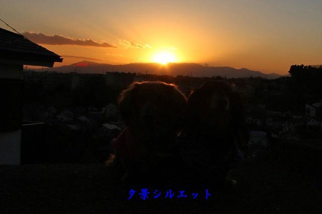 夕景シルエット.jpg