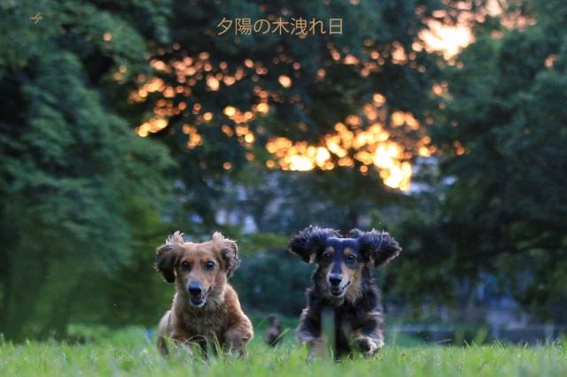 夕陽の木洩れ日.jpg