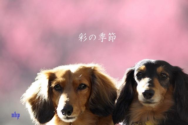 彩の季節.jpg