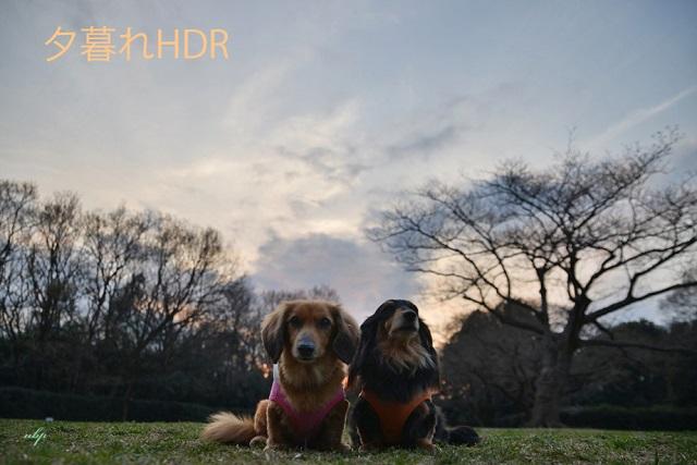 森林公園HDR.jpg