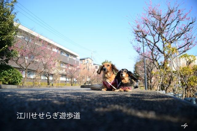江川せせらぎ遊歩道.jpg