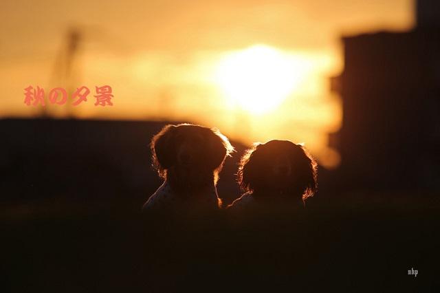 秋の夕景のコピー.jpg