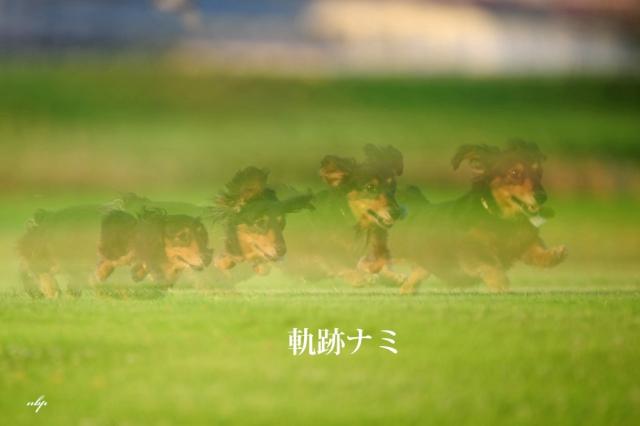 軌跡ナミ.jpg