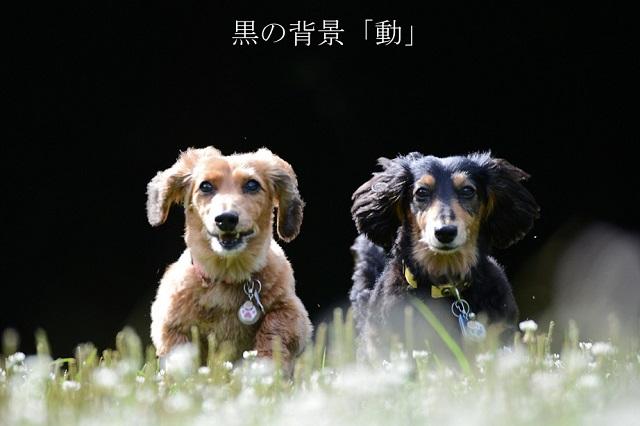 黒の背景「動」.jpg
